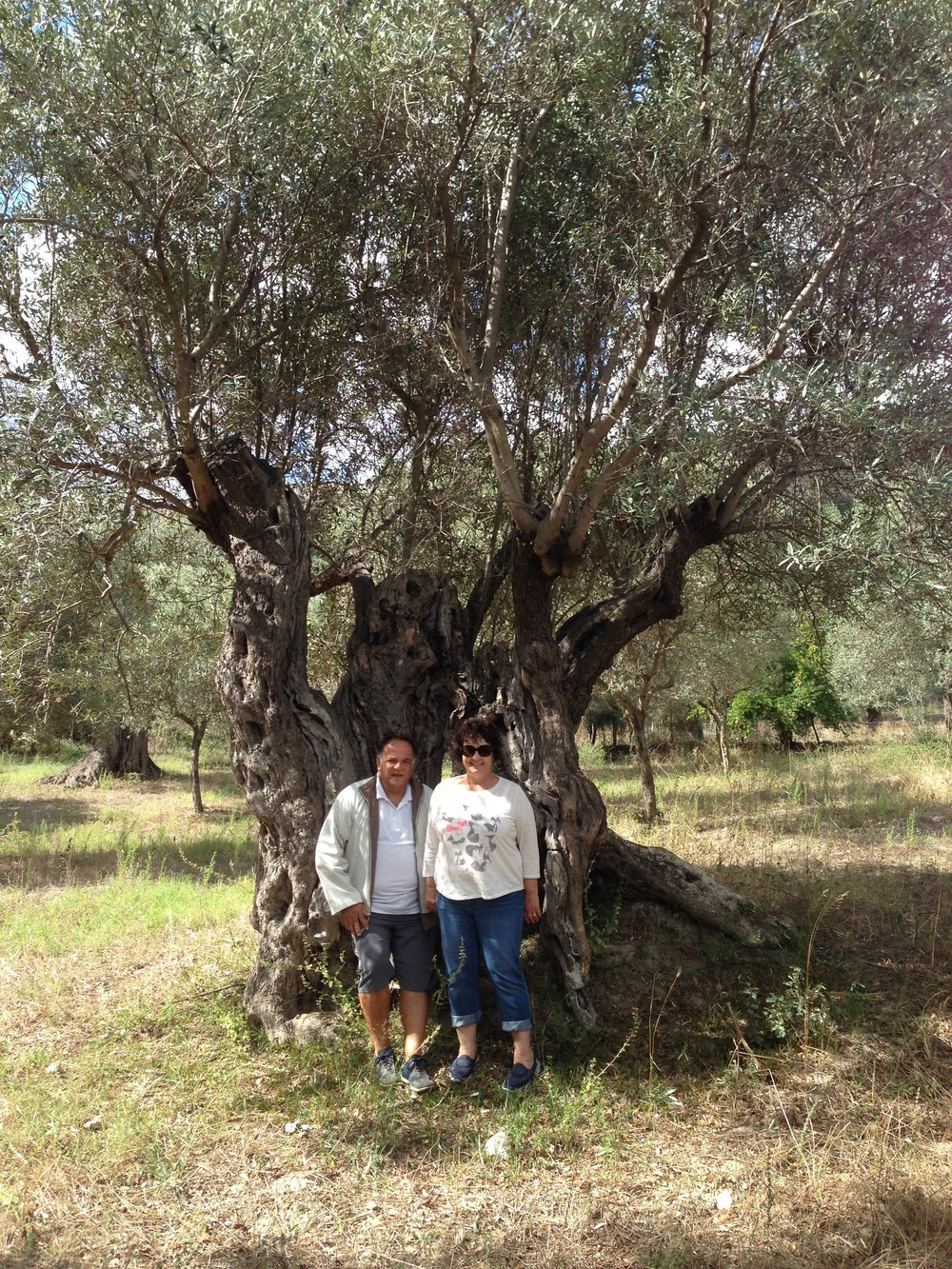 Genine and our Italian friend Vincenzo in front of a 2500 year old olive tree in Melissa, Italy.