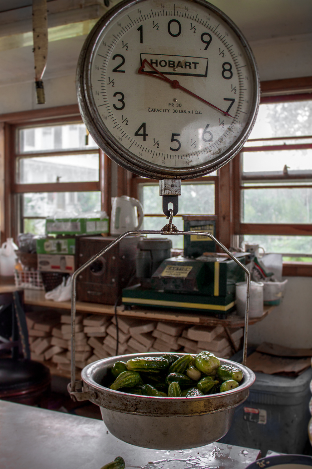 Weighing cucumbers
