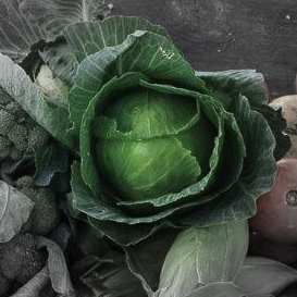 Green cabbage highlighted.jpg