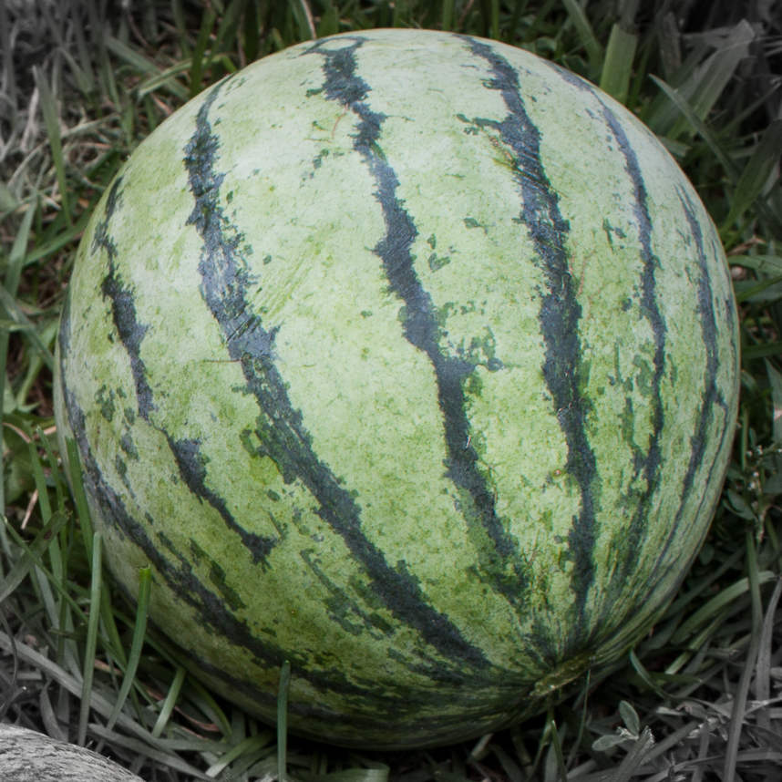 Melon highlighted-2.jpg