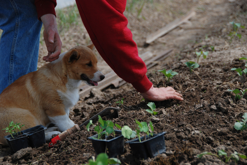 Planting and dog 3.jpg