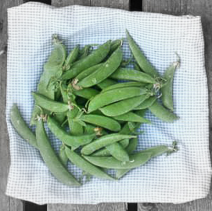 Snow peas highlighted.jpg