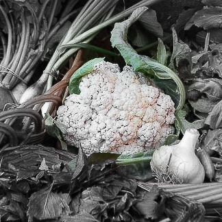 Cauliflower Highlighted-2.jpg