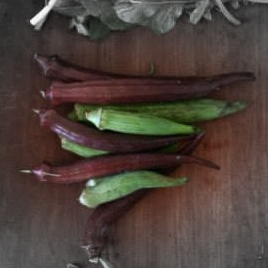 Cajun jewel okra highlighted.jpg
