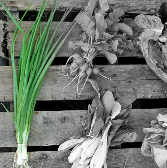 Spring onion highlighted.jpg