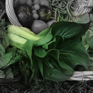 Bok choi Highlighted-2.jpg