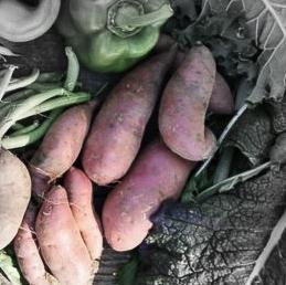 Beauuregard sweet potato highlighted.jpg