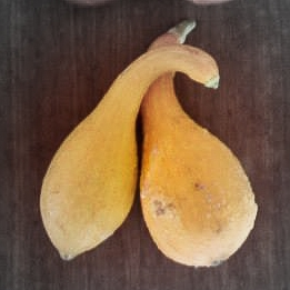 Crookneck squash highlighted.jpg