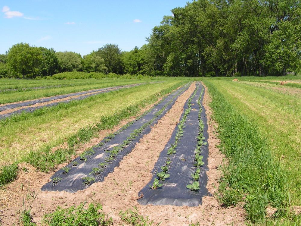 Prairie Grass Mulch-2.jpg
