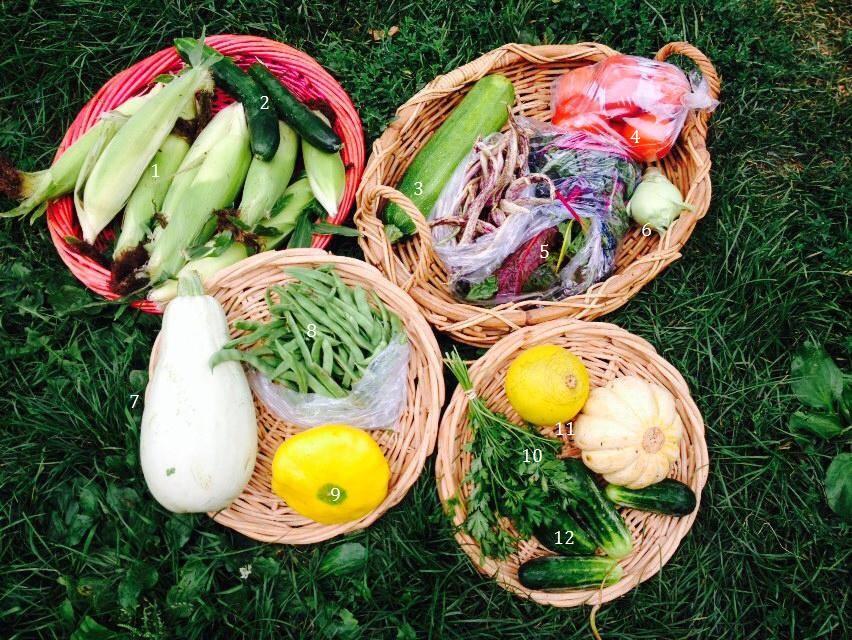1. Organic sweet corn, 2. Poona koona cucumbers, 3. Zucchini, 4. Tomatoes, 5. Bright lights chard, 6. Kohlrabi, 7. Lebanese white squash, 8. Kentucky wonder pole beans, 9. Patty pan squash, 10. Parsley, 11. Heirloom melons, 12. H19 cucumbers