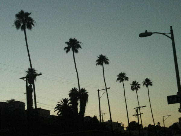 From Keren Taylor's series of photographs titled, Palm Trees & Power Lines. Photo courtesy Keren Taylor