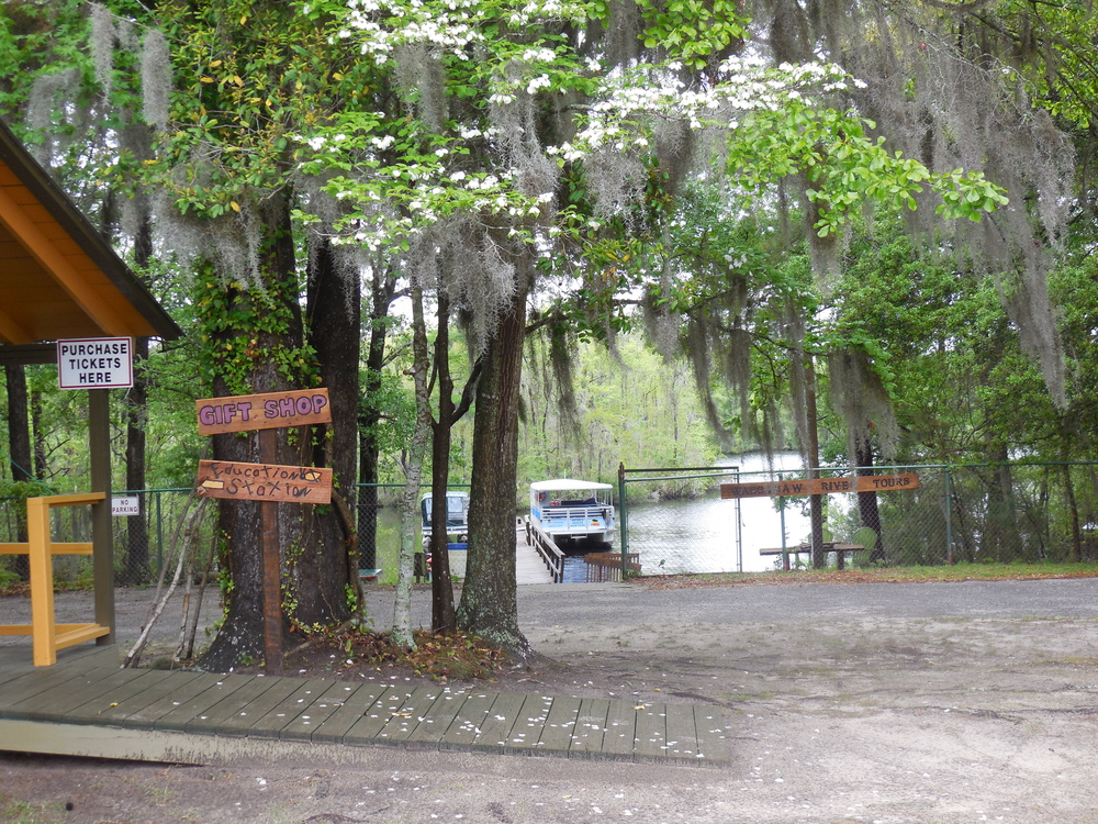 Waccamaw River Tours viewed from our parking lot by the Gift Shop & Education Station. Photo by Kim Carlson