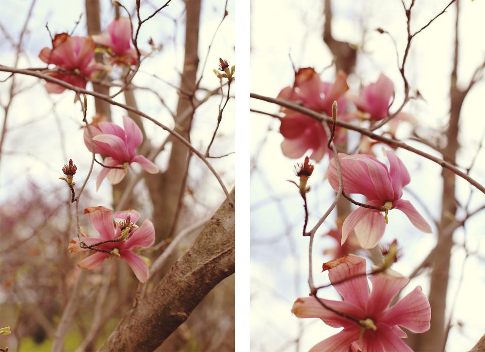 tuliptreedippy1.jpg