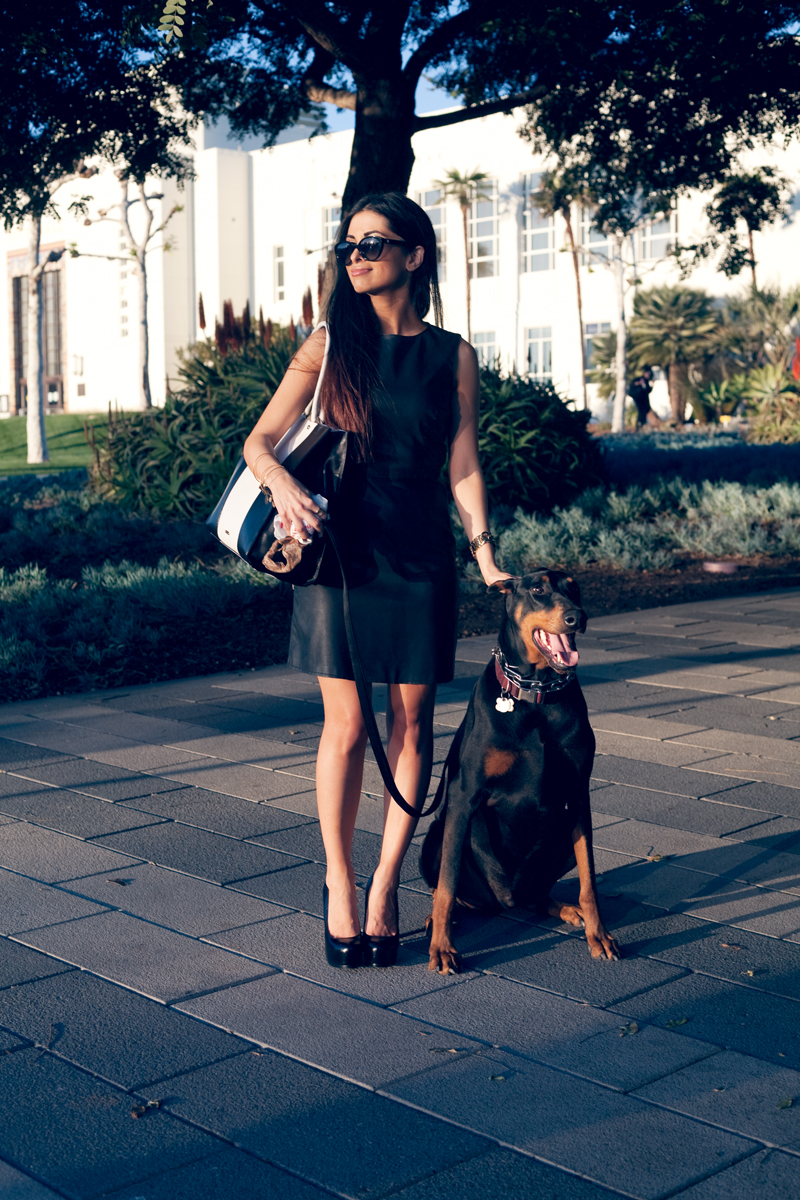 leatherdress_businesswoman_doberman.jpg