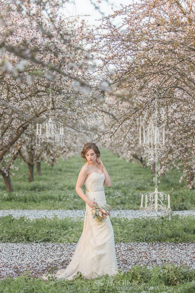 Romantic Bridal Portrait California Almond orchard