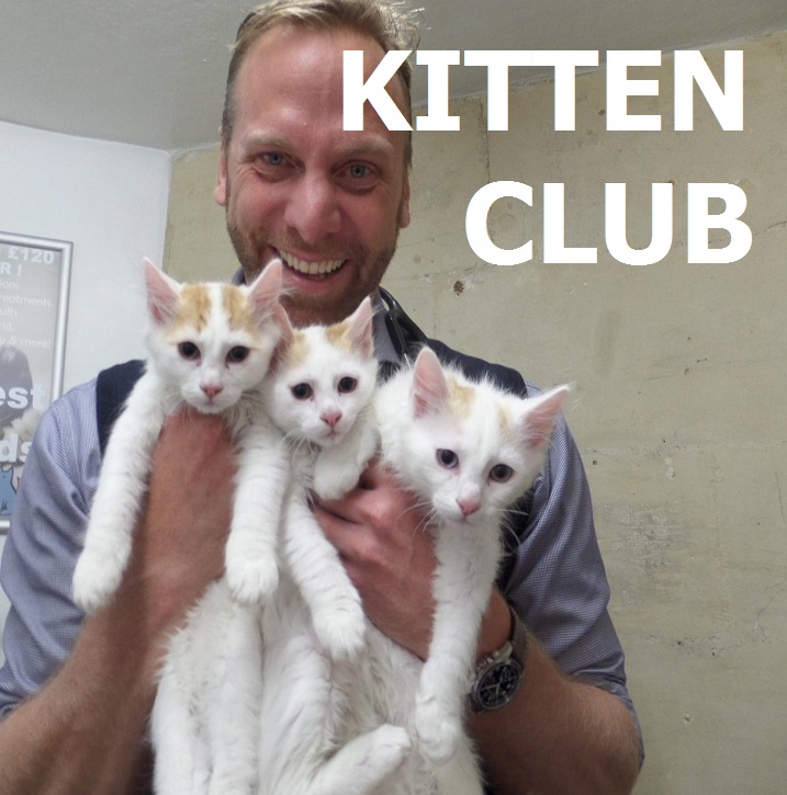 Kitten Club.png
