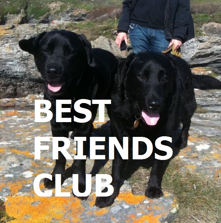 BEST FRIENDS CLUB