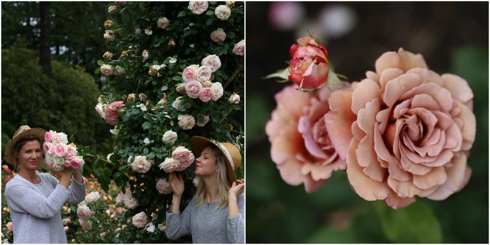 rosegardenrs4.jpg