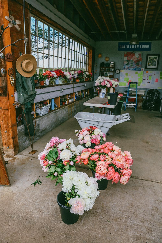 PNW Peony Farm - Oh Flora Travels-10.jpg