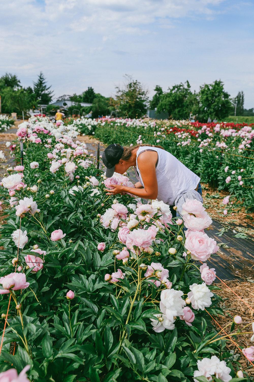 PNW Peony Farm - Oh Flora Travels-16.jpg