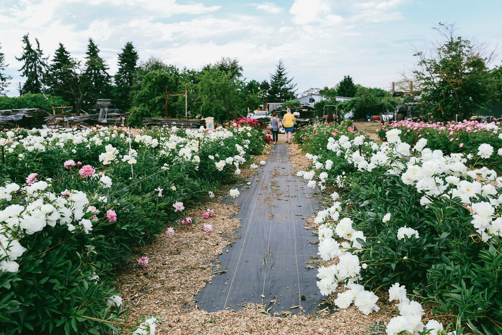 PNW Peony Farm - Oh Flora Travels-21.jpg