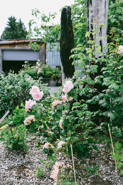 PNW Peony Farm - Oh Flora Travels-28.jpg