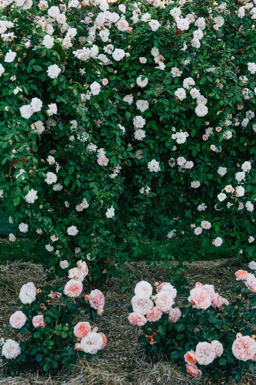 Oh Flora Studio | Floral.jpg