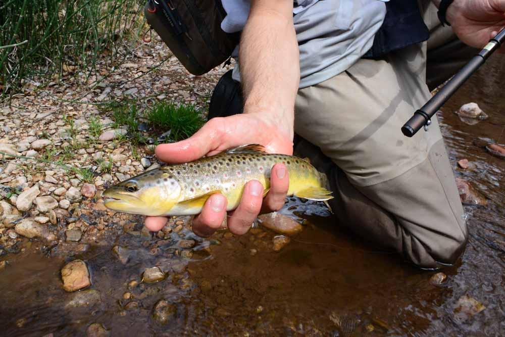 50-50 creek-13.jpg