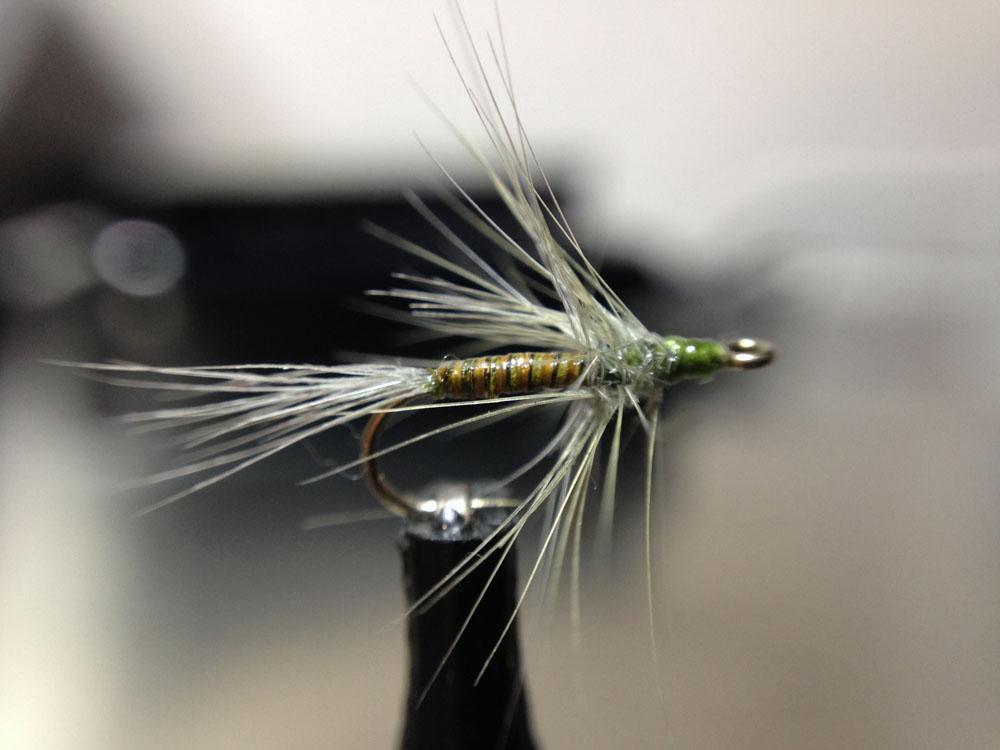 Bud's fly 1-1.jpg