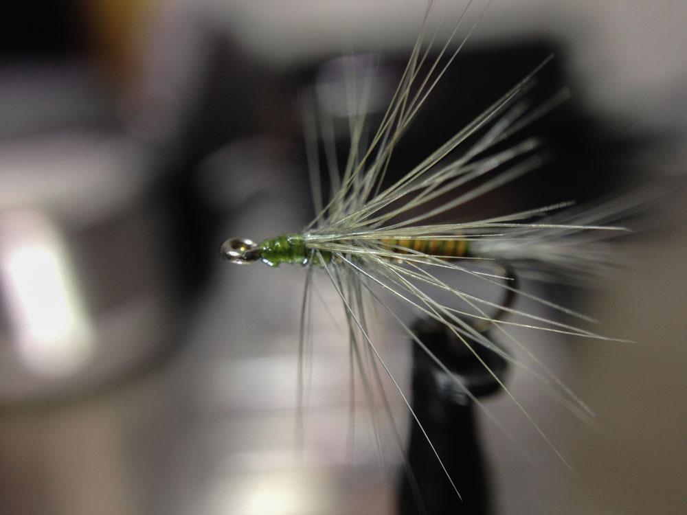 Bud's fly 1-6.jpg