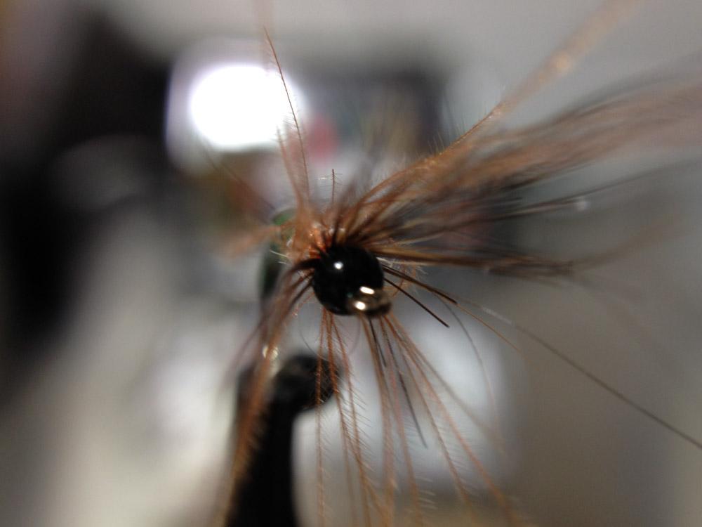 Bud's fly 3-11.jpg