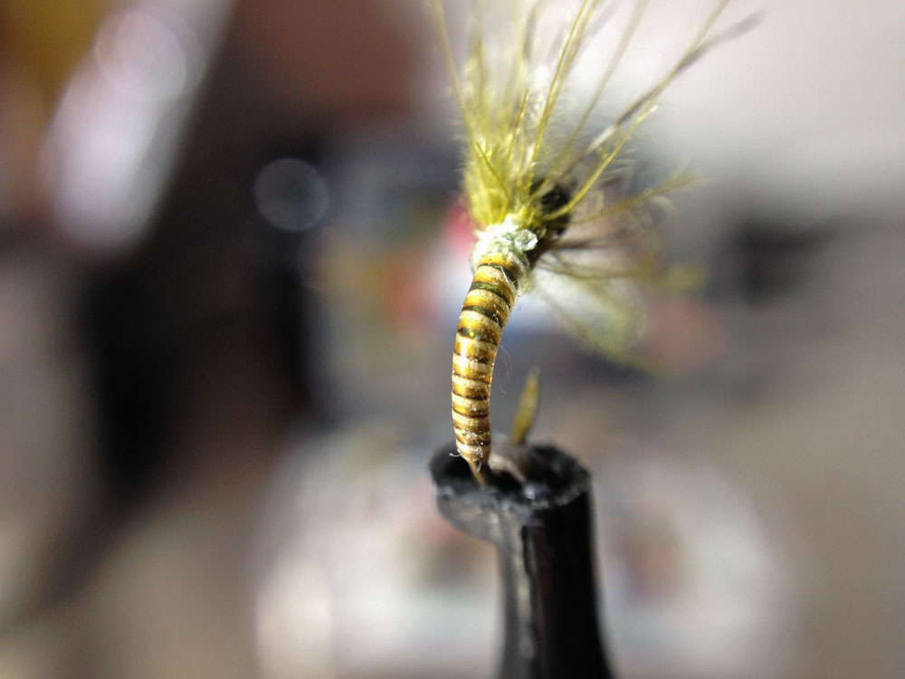 Bud's fly 3-13.jpg