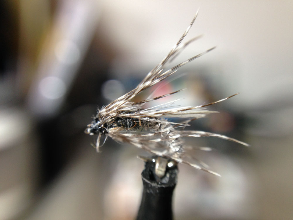 Bud's fly 4-12.jpg