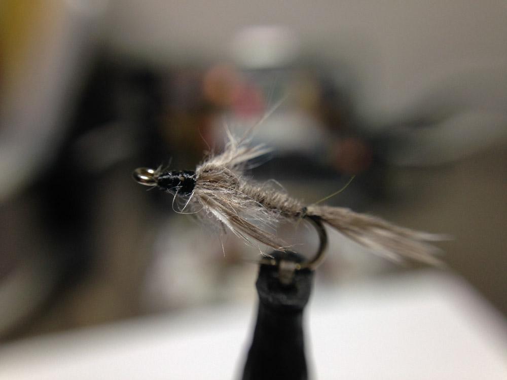 Bud's fly 6-4.jpg