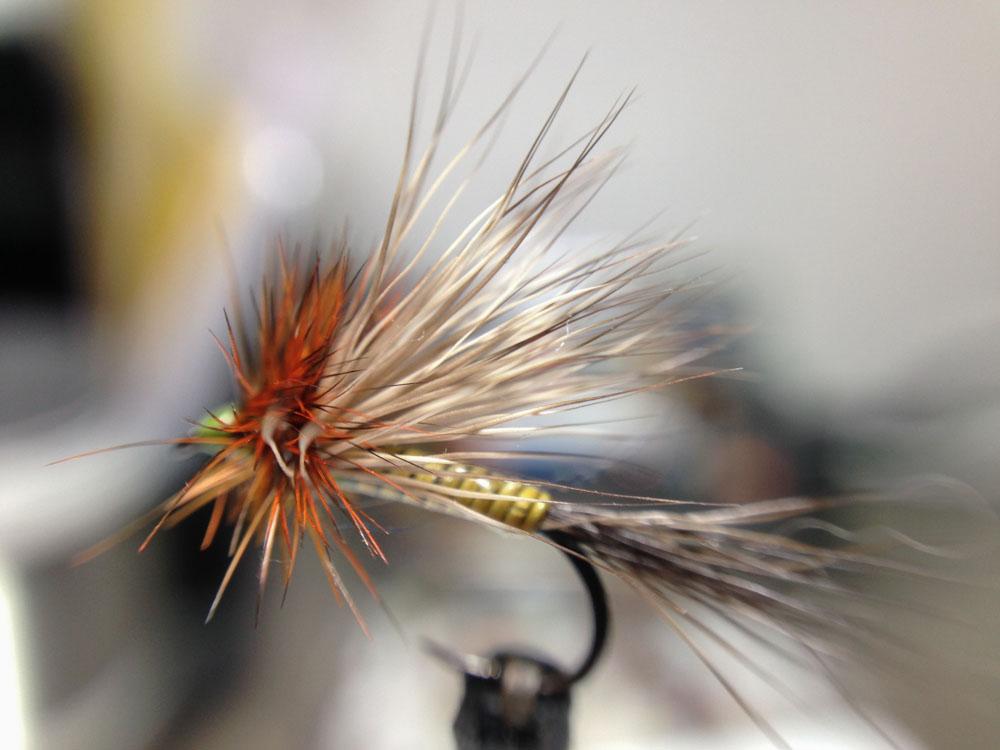 Bud's fly 7-5.jpg