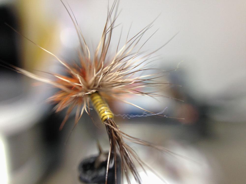 Bud's fly 7-8.jpg