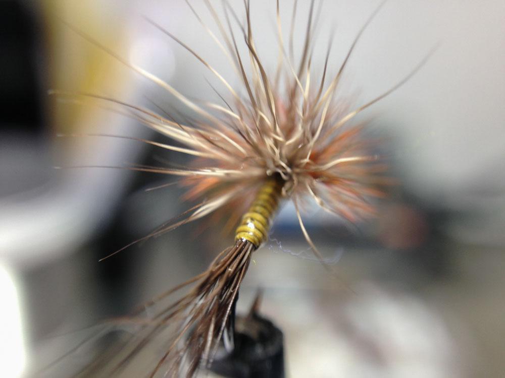 Bud's fly 7-9.jpg