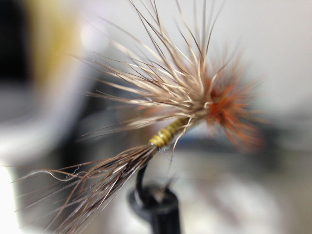 Bud's fly 7-10.jpg
