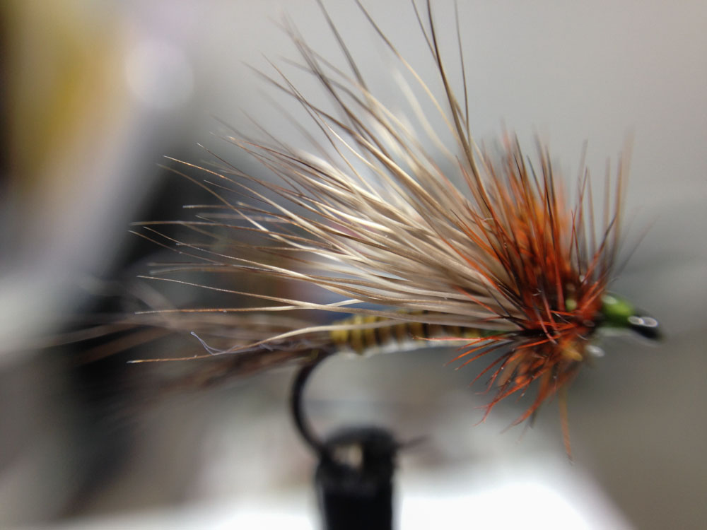 Bud's fly 7-12.jpg