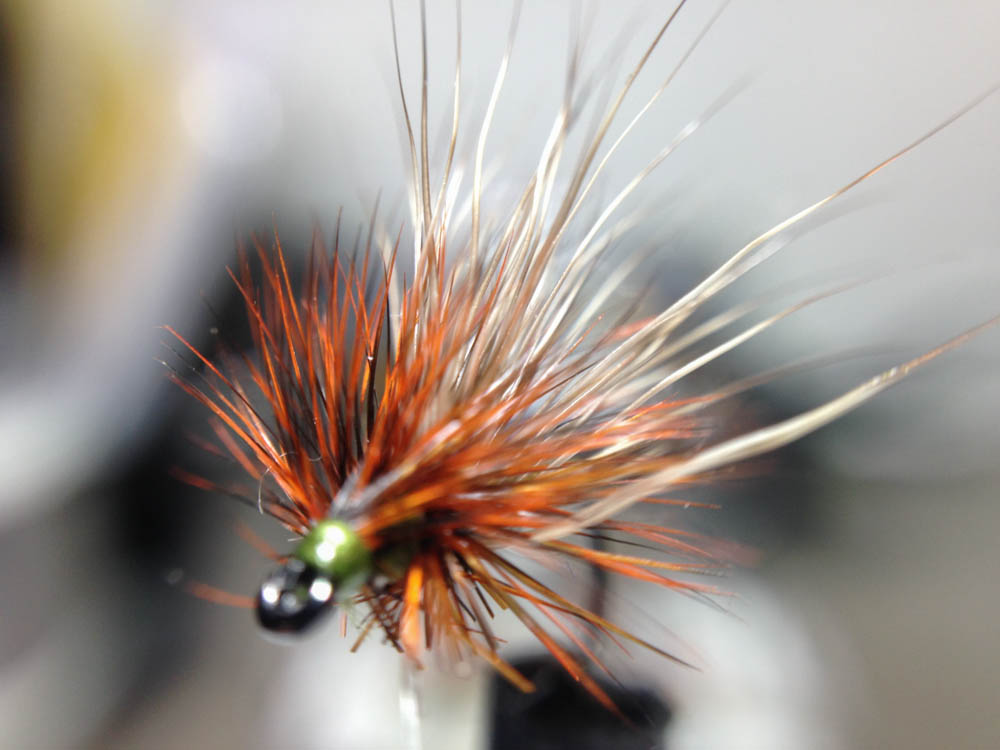 Bud's fly 7-18.jpg