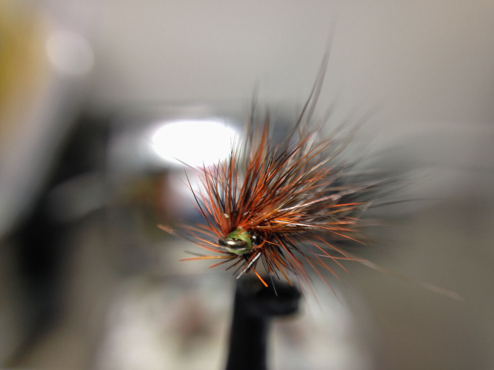 Bud's fly 7-20.jpg