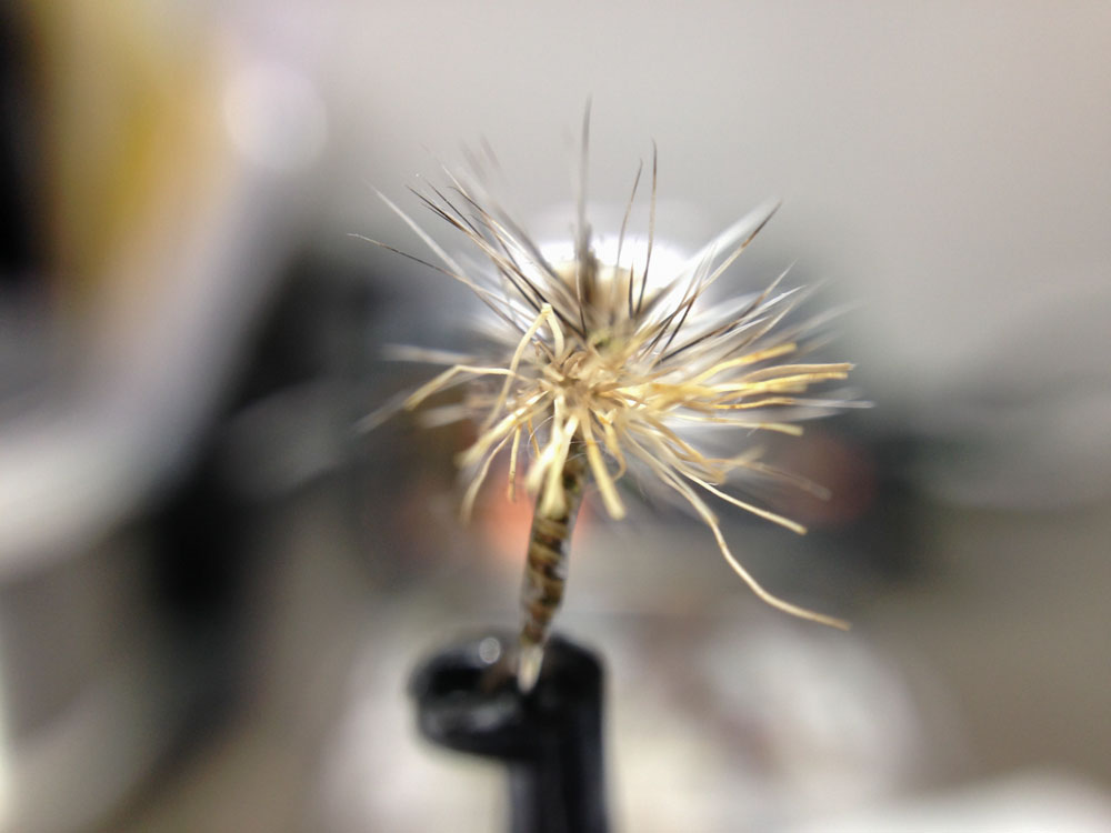 Bud's fly 8-8.jpg