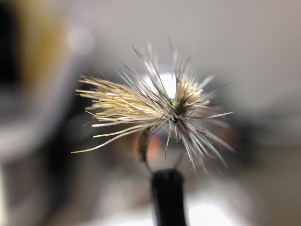 Bud's fly 8-11.jpg