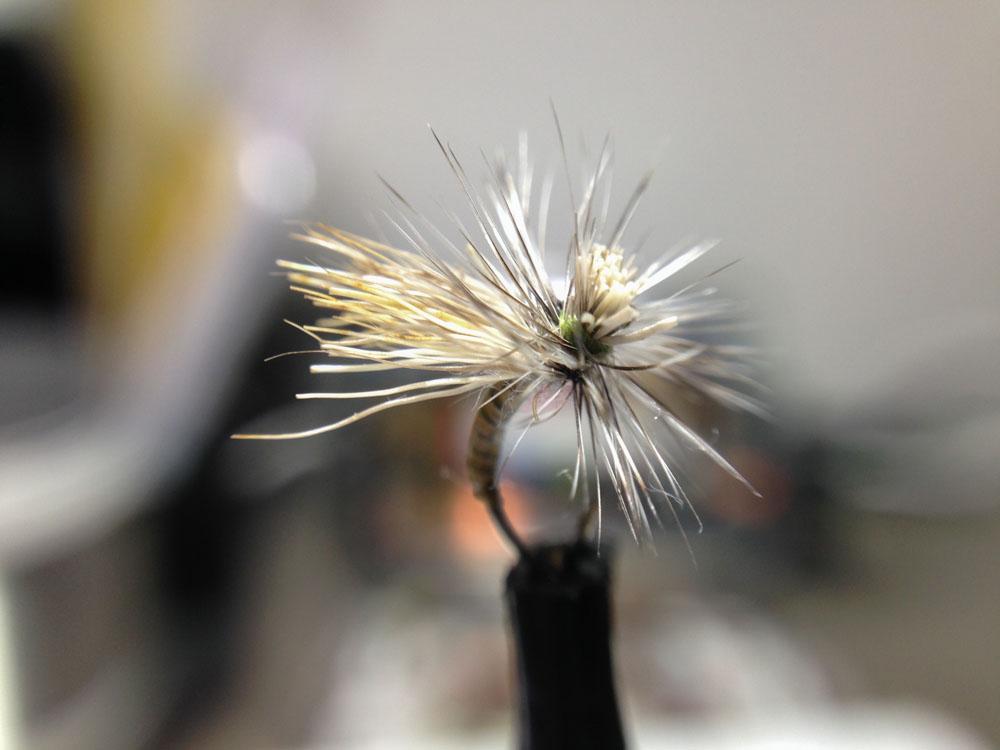 Bud's fly 8-12.jpg
