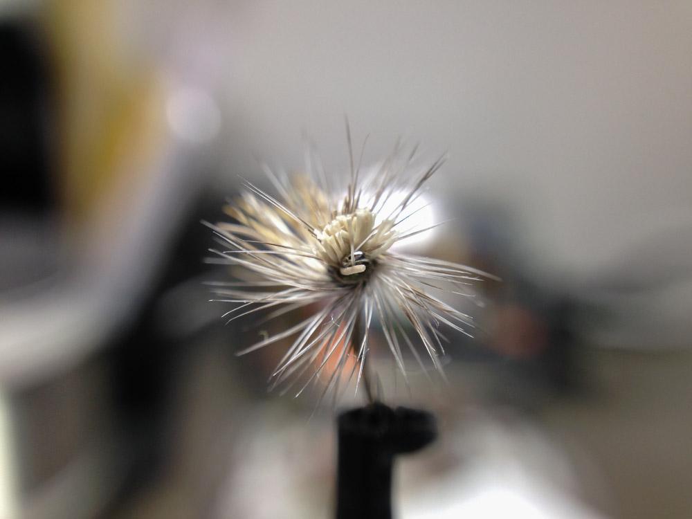 Bud's fly 8-14.jpg