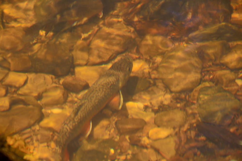 Jac's Creek-3.jpg