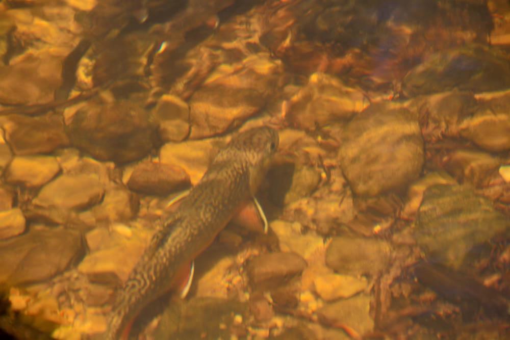Jac's Creek-4.jpg