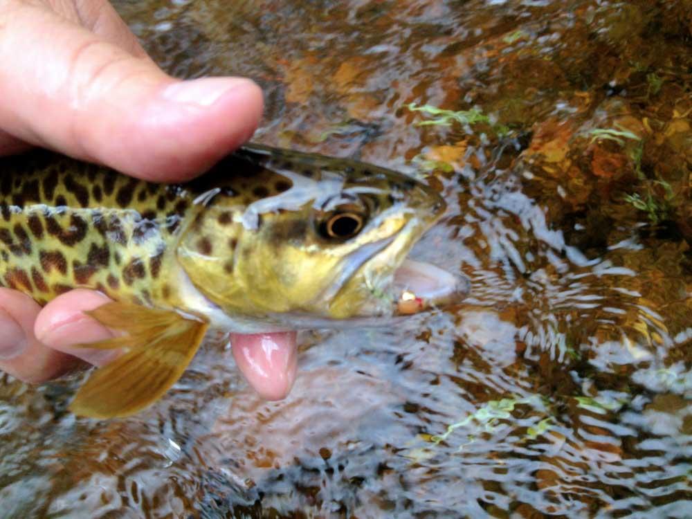 Jac's Creek-14.jpg