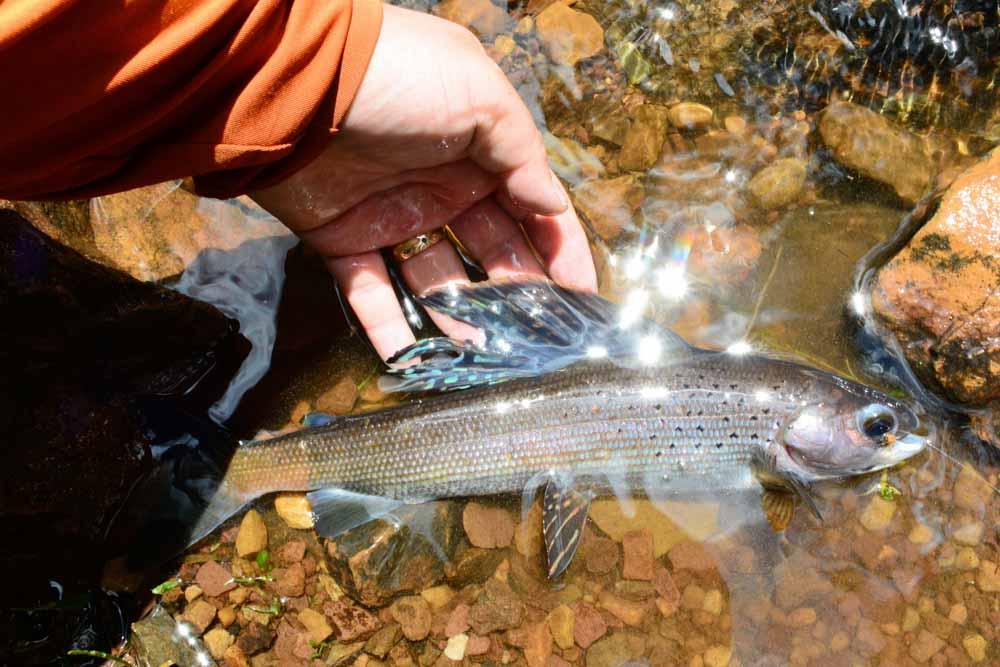 Jac's Creek-15.jpg
