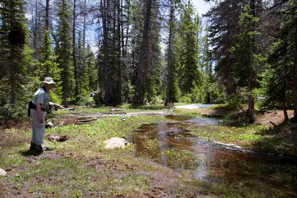 Jac's Creek-7.jpg